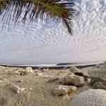 Sozinhos surf lodge Asu island